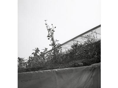野尻 浩行「今、清き光の事、地の事」