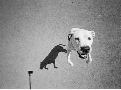 トーマス・ロマ「犬」-Mondo Cane-