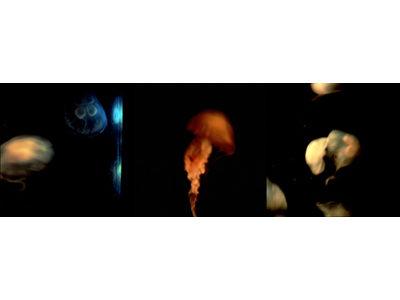 ミゲル リオ ブランコ ―浮遊する闇―